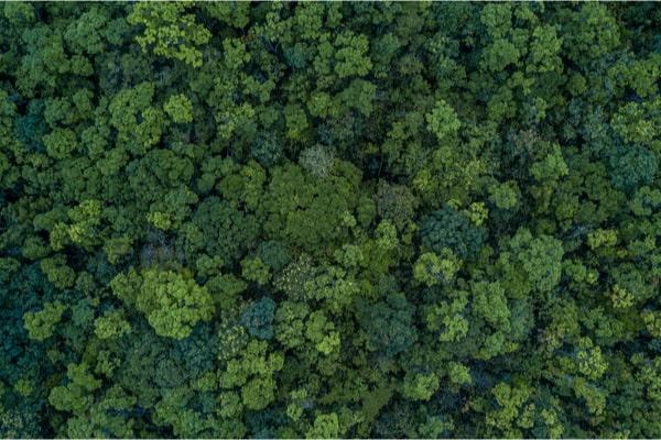 Redonner vie à la forêt
